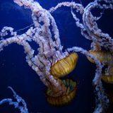 jellyfish-690472__180